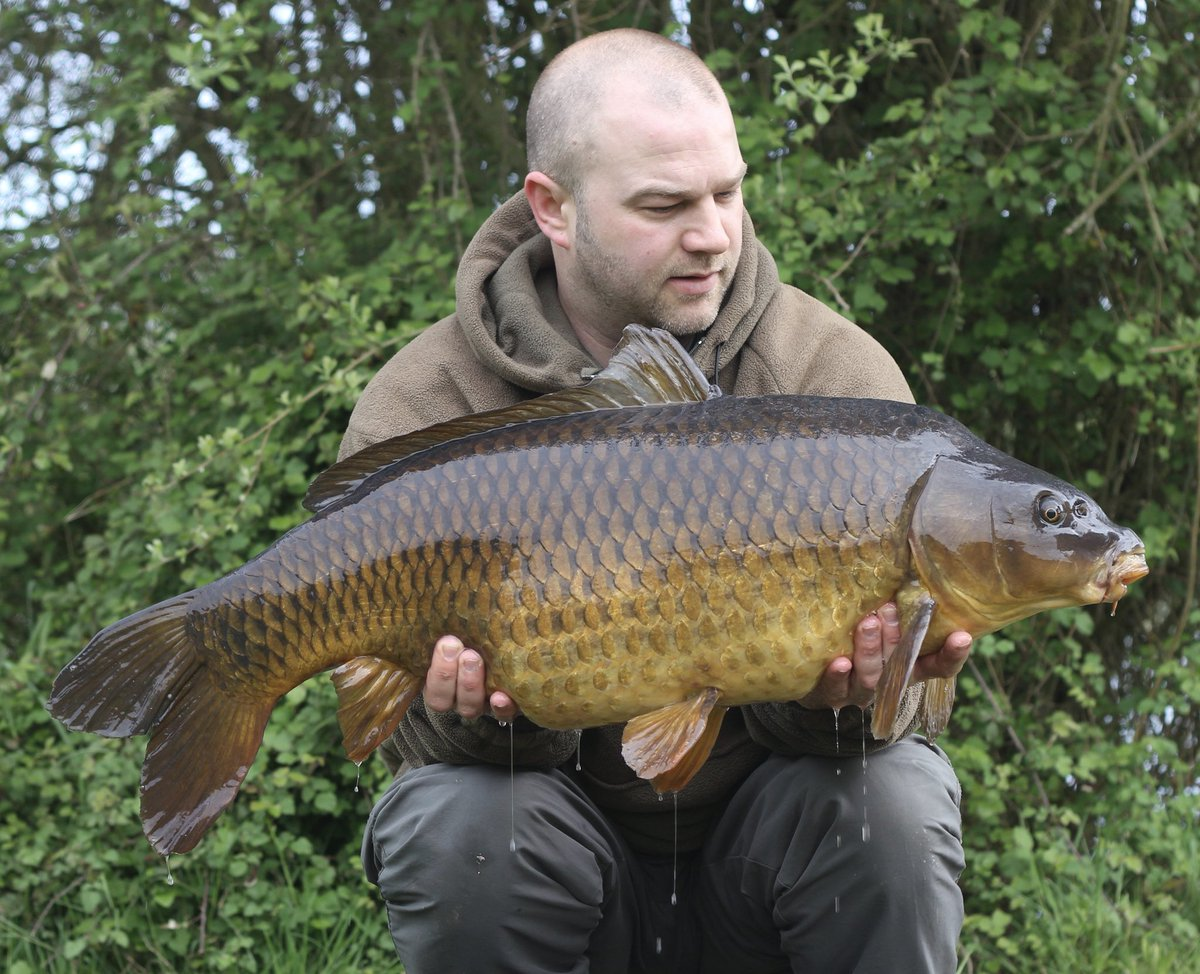 29lb8oz <b>Common Carp</b> #carpfishing instagram @carp_mart https://t.co/1RN99wQBjc