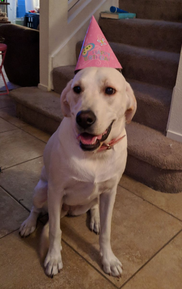 My sweet puppy Grace turns 1 today. YfDm0RTEFr