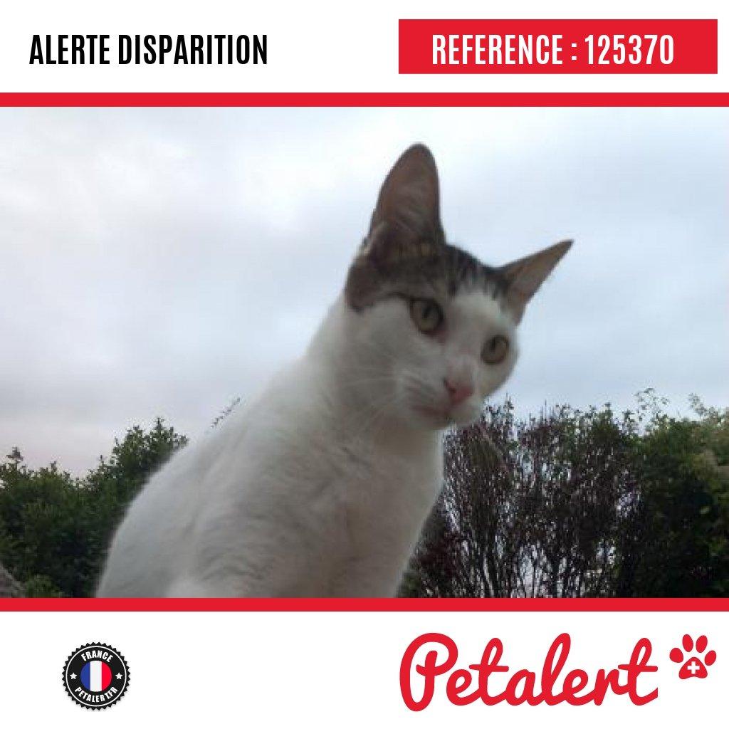 Disparu #Chat #CharenteMaritime #Medis #Petalert  #Pet  #Alert / https://t.co/b3Ms3aU0pc https://t.co/XJwq1ngQz5