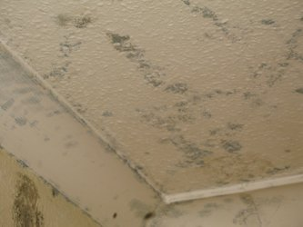 Remediating #Mold From Painted Surfaces (semi-porous mold removal) PLS RT https://t.co/otTXisUQEs #moldsensitized https://t.co/NC7mewbRh2