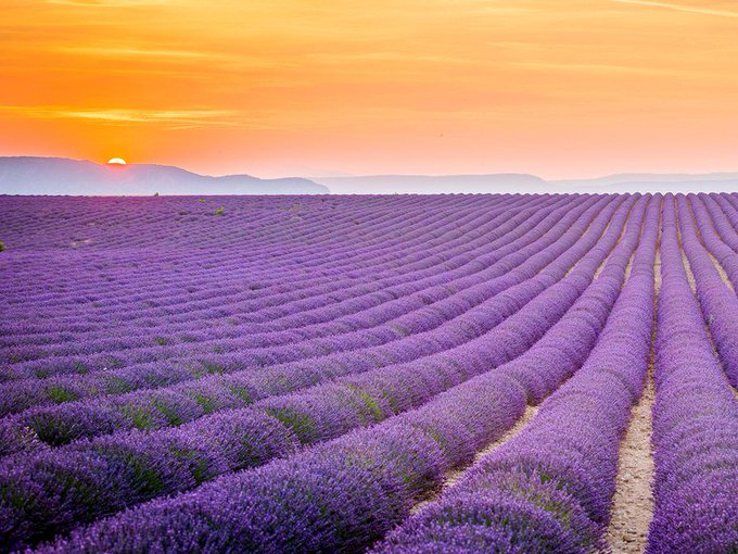 Beauty takes a different form in the Lavender Fields of Provence, #France. #travel  https://t.co/7pjdf7pTY6 https://t.co/fzSuF54pQl