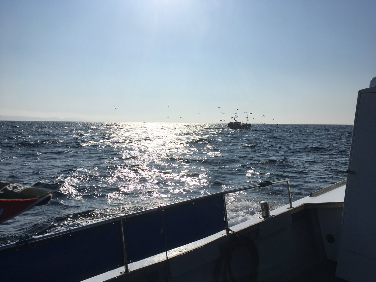 test Twitter Media - Beautiful day yesterday in Weymouth fishing with @AmarisaWeymouth lovely weather, great company and great day fishing! https://t.co/YC43QnYnGW