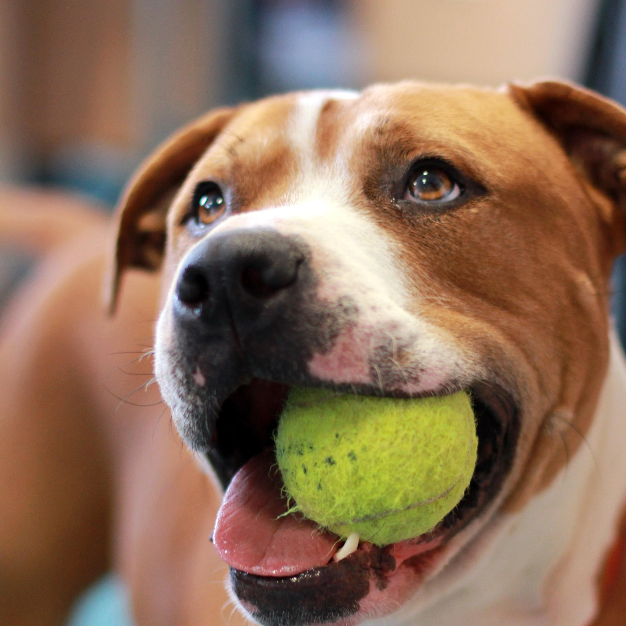 Our dogs are huge tennis fans, so we\d like to wish a very happy birthday to Sir