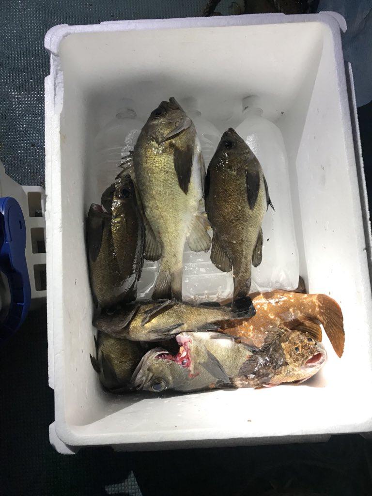 昨日の釣りは楽しかったー! いい釣果!笑 https://t.co/xes8FN8CpU