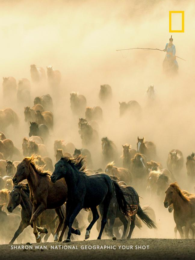 Top Shot: Herd on the Move https://t.co/6HPIh9MsYZ #YourShot https://t.co/Qb5w9vQGXW