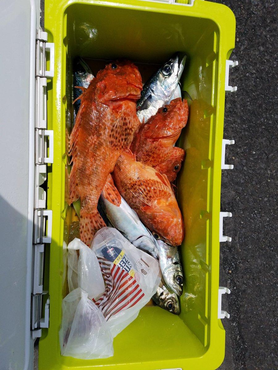 今日の釣果です。 お客様 全員 オニカサゴ 釣れて良かったです\(^o^)/ https://t.co/Ktb0cOwiaK