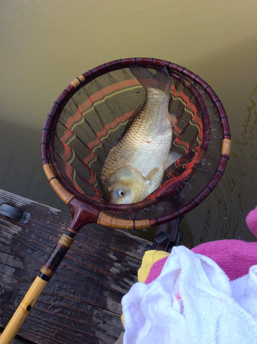釣友3人で岩槻の村国園に釣行6枚の釣果大型が多く楽しめた、明日も行こう今週は釣リ三昧。 https://t.co/Ke2ehwZsCx
