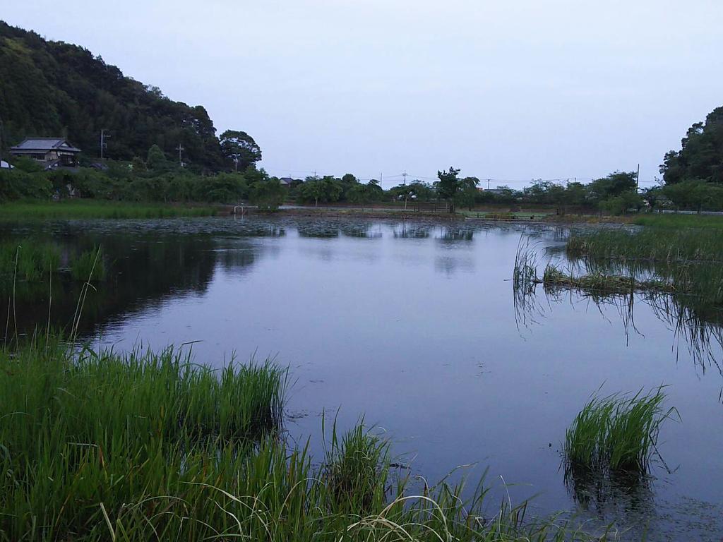 この画像の池で釣りを遣ってたらブルーギルかブラックバスか分からないですがヒットしたのですが途中で針が外れて魚を逃がしてしまった(´д`|||) https://t.co/QZzfyo0eF3