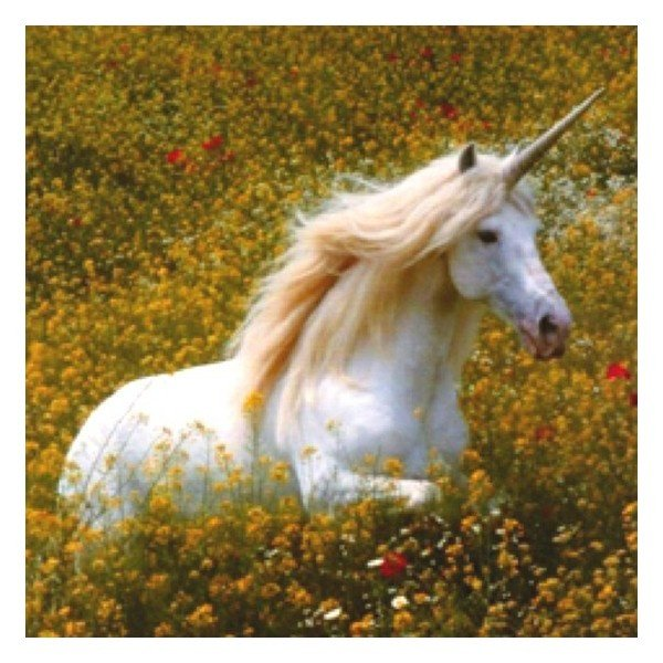 test Twitter Media - A symbol of purity and grace, did you know that only a virgin can capture a unicorn? #fantasyfan #fantasynovel https://t.co/yS2vK9OgrK