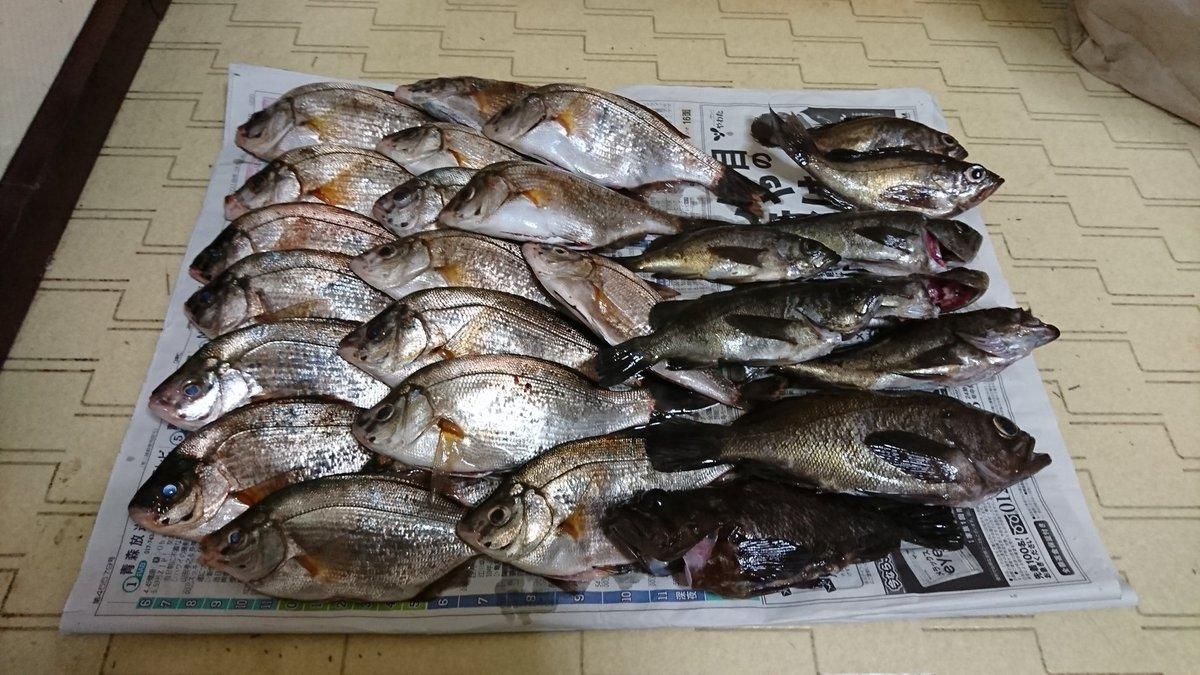 昨日の釣果 タナゴ18匹、メバル15~23センチ 8匹(ワンキャストワンヒットリリース多数) ムラソイ1匹 https://t.co/s3rcGBpBVw