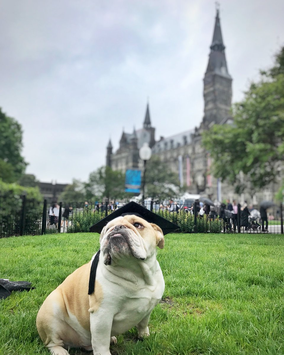 RT @GeorgetownJack: All the #Hoyas2018 moving on pup in the world 🎉🎓Congratulations! https://t.co/eUIRrMtn2Z