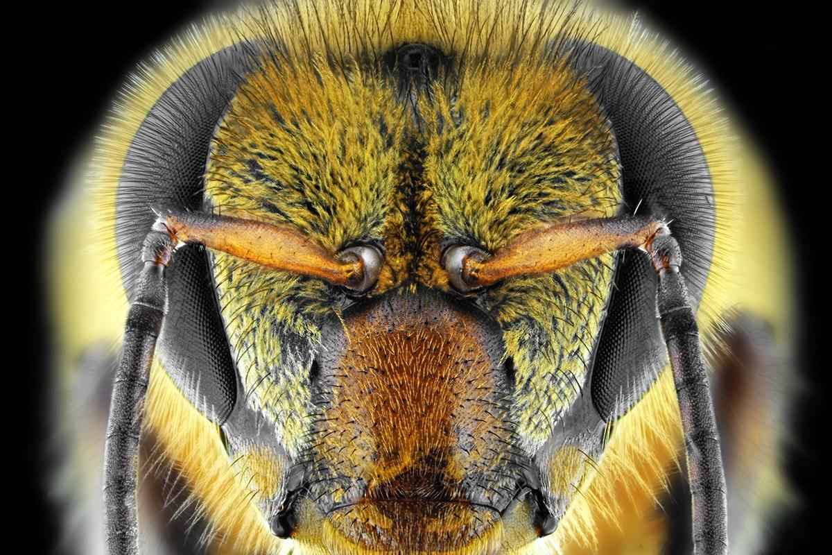 Bees are first insects shown to understand the con