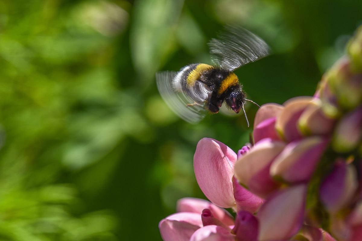 Don't worry, bee happy: Bees found to have emotions and moods #WorldBeeDay https://t.co/d3z7Zs9Zyl https://t.co/C6HAGV1LLq