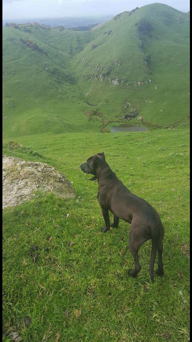 2 pic. 💚💚💚💚 #cutestpupever #doglover #dogsoftwitter #puppylove #puppycrush #rescuedog 🐾 /