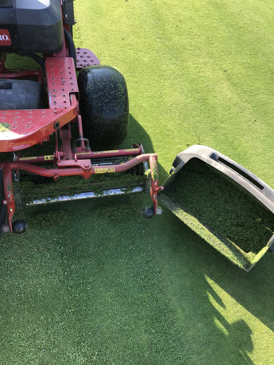 test Twitter Media - The fight against the seeding of poa this morning , always amazes me how vigorous the poa busters can be but not to the surface of the green . https://t.co/oYQBpd4irG