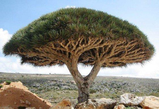 #Árbol Tendrás un árbol. Y los pájaros hablaran por él. Isabel Bono. https://t.co/oS8xH1O1GQ
