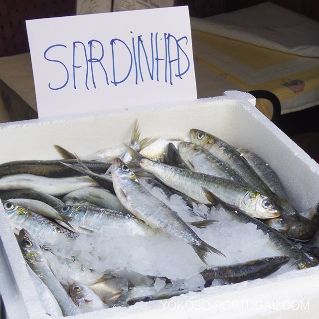 test ツイッターメディア - ポルトガルのイワシ漁は、今日が正式な解禁日です。この夏ポルトガルを訪れる方は是非ご賞味ください。脂のったプリプリのポルトガルのイワシは美味しいですよ。 #ポルトガル https://t.co/HC5mIUKT2r