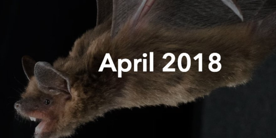 test Twitter Media - From double-clicking bats to unimpressed microbiomes, you can read all the research we published in April via our monthly archive https://t.co/Q6npj59o4r https://t.co/rWY3AjT1z8
