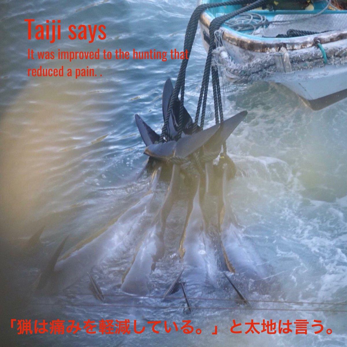 まだ生きています。 They still live. 💔💔💔💔💔😢😢😢😢😢 #thecove  #tweet4dolphins  #EmptyTheTanks  #dontbuyaticket...