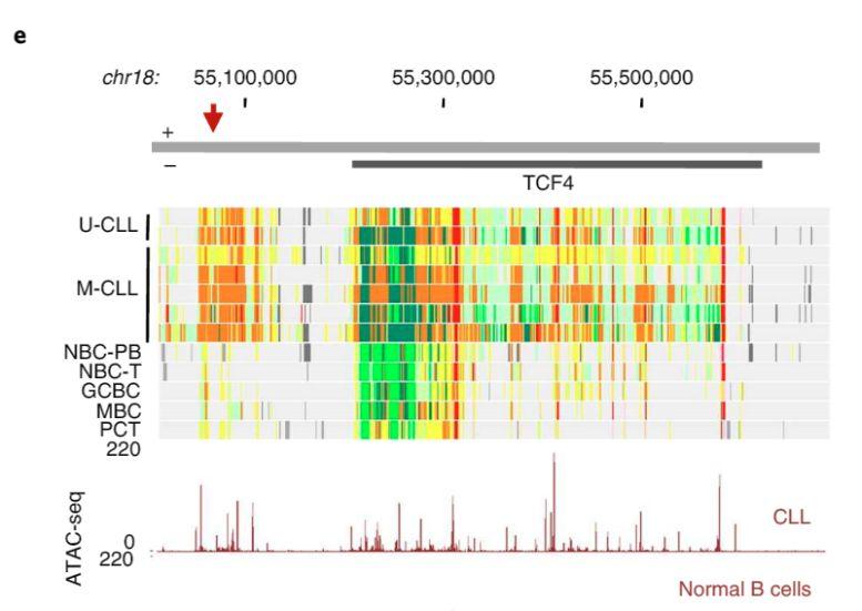 El genoma de la #leucemia más común en adultos fue finalmente descifrado https://t.co/LGy2IBlKRl https://t.co/Tfp7XotdCs