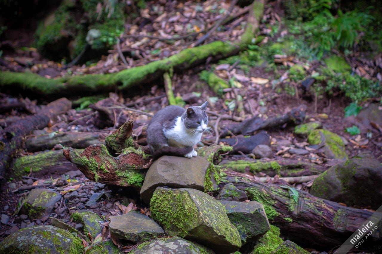Levada cat .... Levada do Caldeirão Verde #sharingmadeira #madeiraful #madeira https://t.co/bJYYh3psOK