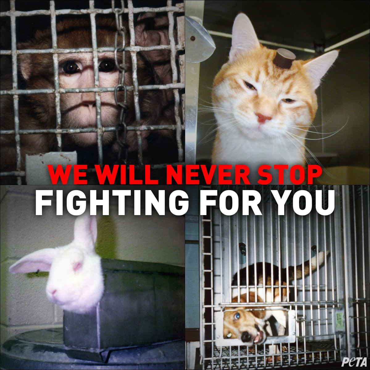 RT @peta: We won't stop fighting until ALL tests on animals end! #StopAnimalTests https://t.co/EfAmzLA4B9