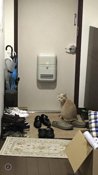 tomozawa_mamoruさんのツイート画像