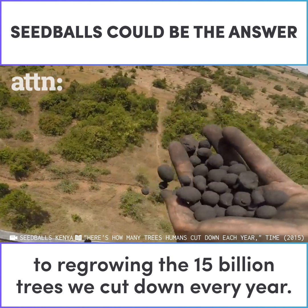 seedballs could be the answer to regrowing the 15 billion trees we