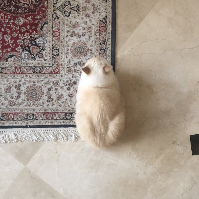 RT @M7mdDelRey: She likes to sit on the corners of carpets https://t.co/JITeB7WHNC