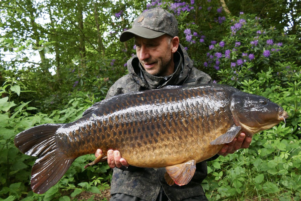 Mega <b>Looking</b> Common from Weston Park yesterday, big thanks to @RobHales2 👍 #ScopexSquid #c