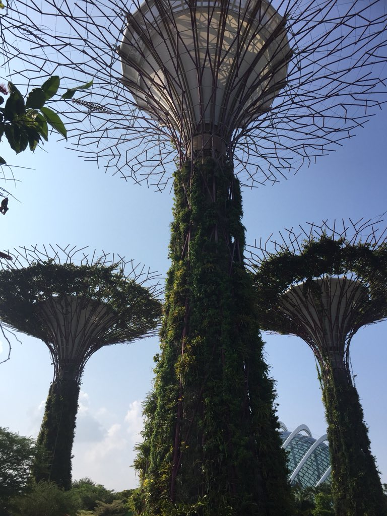 Before flying back home, beautiful visit today of the gardens by the bay in #Singapore. https://t.co/f0nSZCQKlY