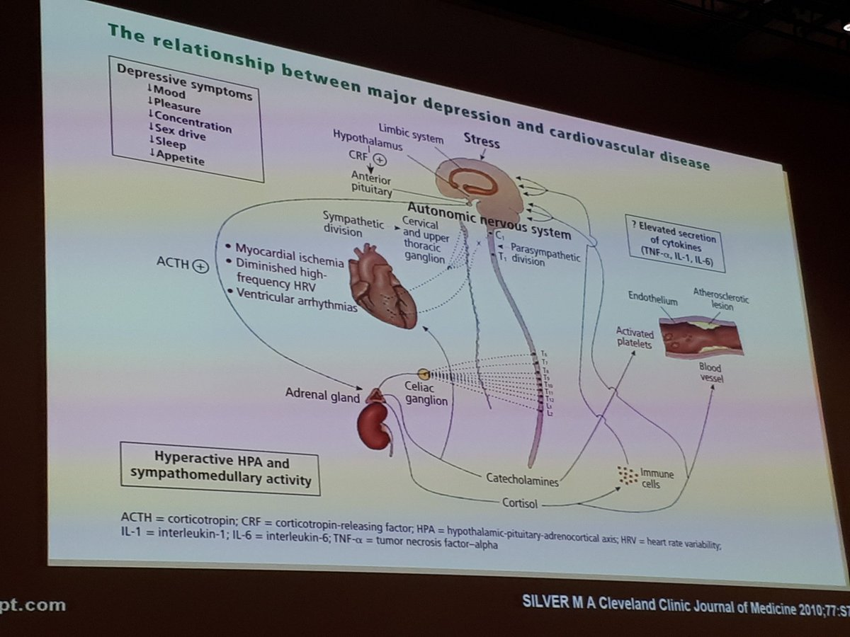 test Twitter Media - Strong link between major depression and CVD #EuroHeartCare2018 https://t.co/rPAefTYDoU