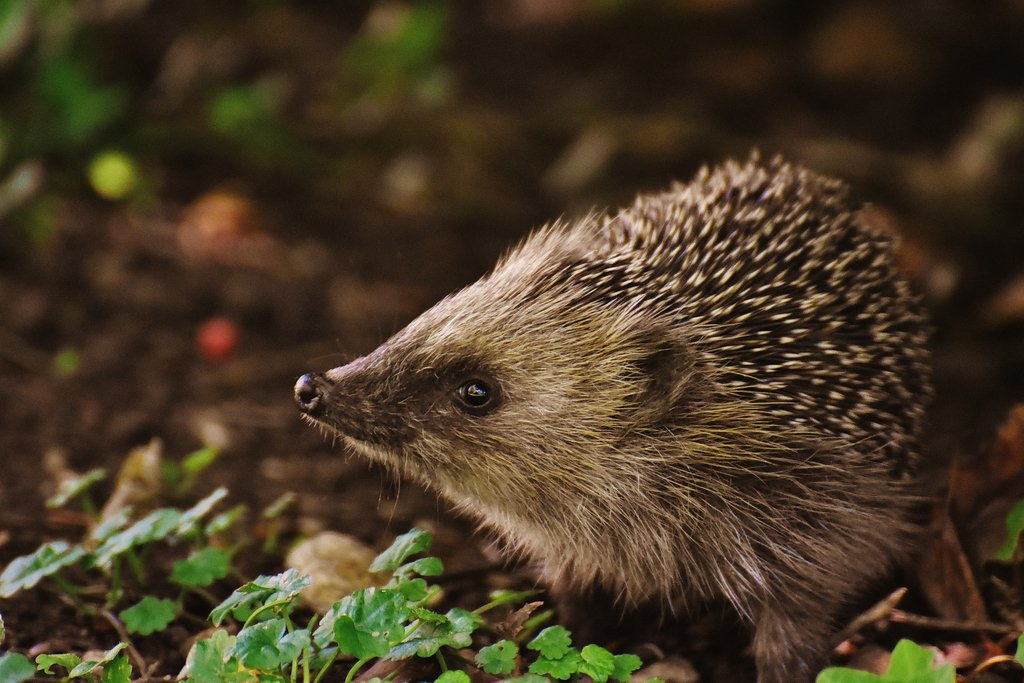 test Twitter Media - Almost a fifth of Britain's mammal species face a high risk of #extinction. #Biodynamic farming principles can help prevent their decline https://t.co/6BOBE5uKj4 https://t.co/cYHMvxUFEZ