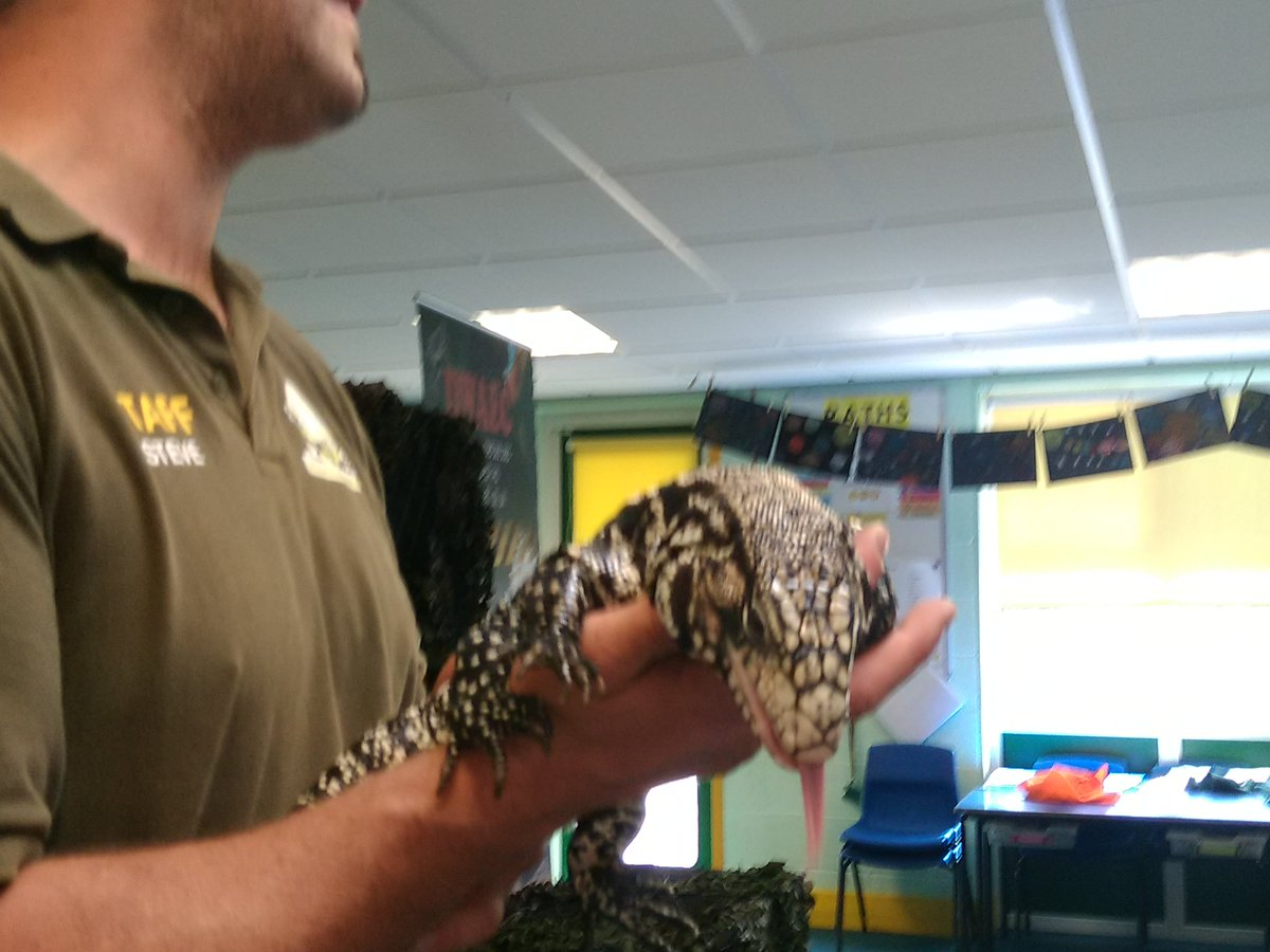 test Twitter Media - Year 5 had an animal-azing morning this morning with @dwaec_ltd. https://t.co/02YgDaTdBf