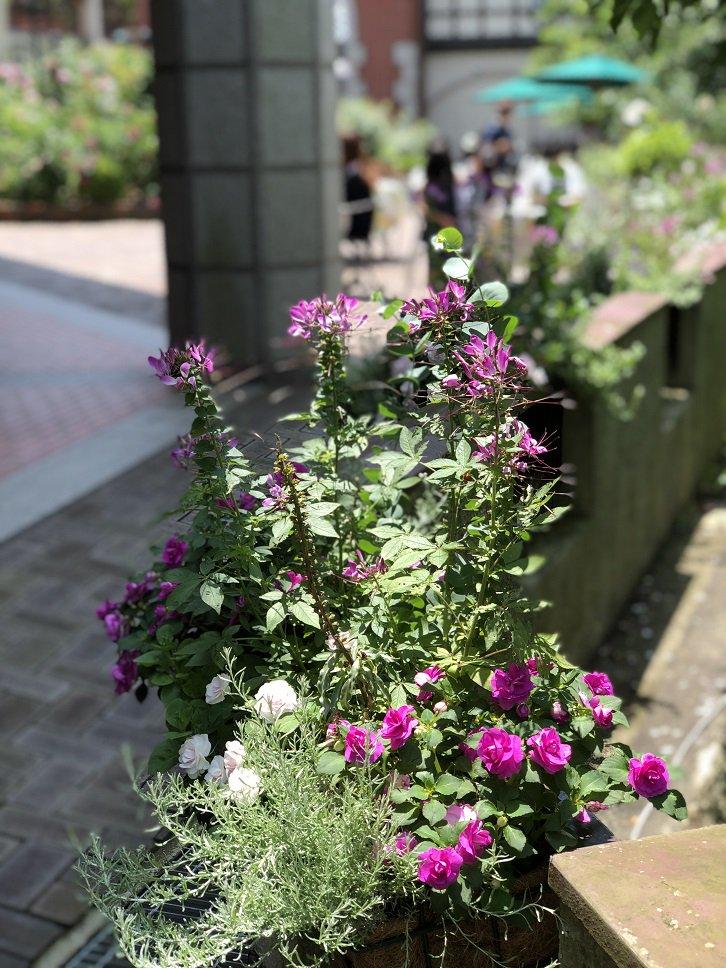 ローズシンフォニーガーデンで開催されている「ローズカフェ」  テーブル飾花やハンギングの寄せ植えも見どころの一つです!花々に囲まれながら、ハーブティーを飲む贅沢な時間をお楽しみください(*^_^*) https://t.co/C3Bx6PKHAd
