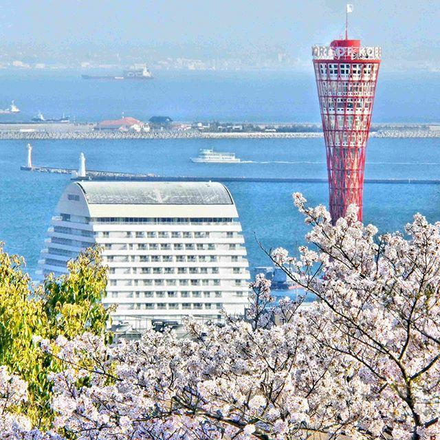 諏訪山公園から見た神戸港春望  神戸港を航行する船とポートタワーを桜を入れて遠望できる唯一の場所であること。木々の間から望む隠れスポット。 撮影:古宮 威志 #神戸 #ひょうごの景観 #諏訪山公園 #神戸港 #ポートタワー #神戸市 https://t.co/FoGV0NZ49S