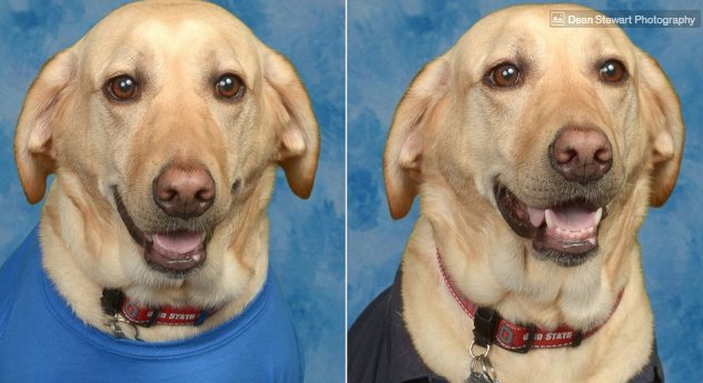 Sweet service dog shines in yearbook photos at elementary school: https://t.co/mA1jlBKfcf https://t.co/majtkqlgUG