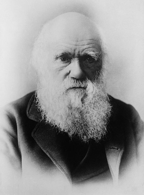 test Twitter Media - Did Charles Darwin avoid publishing his theory of evolution for many years? Find out more https://t.co/inZXeJlRru #notesandrecords #Darwin https://t.co/UVYNowyQlu