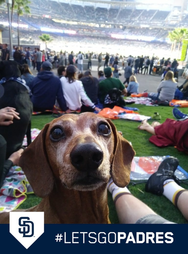 #PetcoDogDays