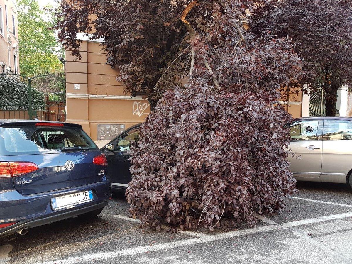 test Twitter Media - La normalità a Roma dove gli alberi bassi non vengono potati da anni. Qui via degli Scipioni https://t.co/PNAH0s5V9O