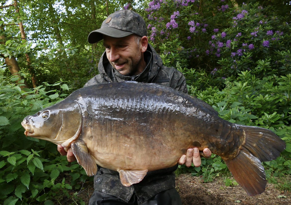 Nice 30+ from the <b>Stunning</b> Weston Park in Shropshire, on the Scopex Squid 👍 #carpfishing h