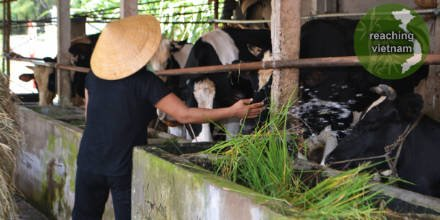test Twitter Media - Psalm 23.2. As they tend to their own flocks, may they understand the eternal care their Good Shepherd provides them with. #pray4vietnam https://t.co/N61dElGPGs