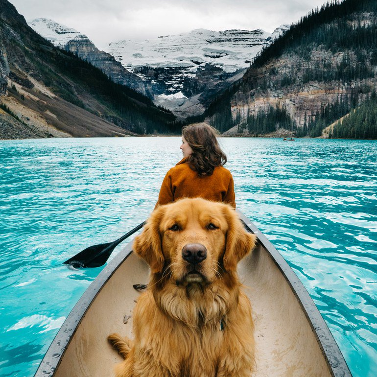 16 pets of Instagram who travel better than we do https://t.co/vh43g5v82k https://t.co/uNAEiBjOBU
