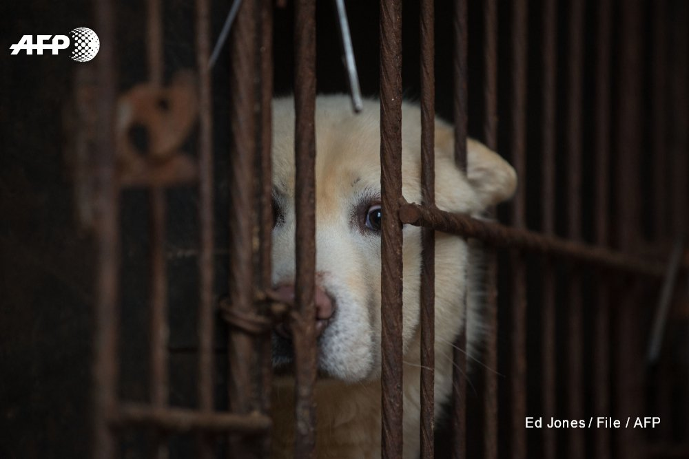 South Korea has outlawed the killing of dogs for meat in a landmark ruling https://t.co/S1CE5sNbzG https://t.co/ttmPuXFMBr