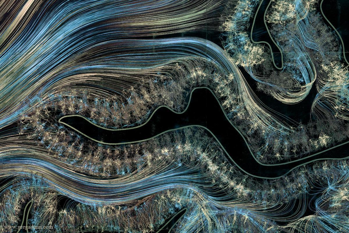 Brain images display the beauty and complexity of