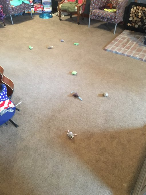 And now I know why my one cat sleeps all day. Cat toys everywhere! https://t.co/XuPELXnLV2