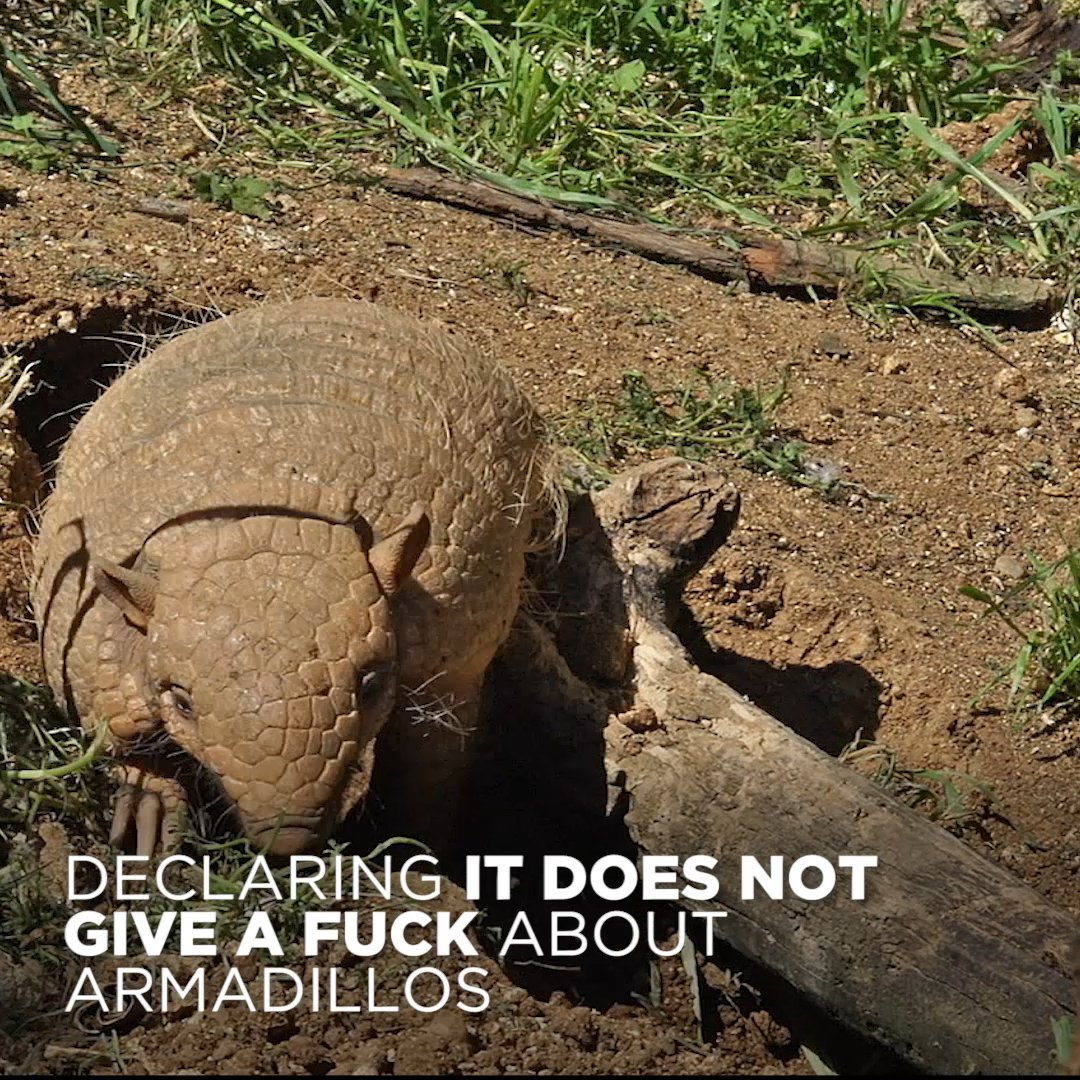 PETA Admits It Doesn't Give A Fuck About Armadillos https://t.co/1X3tvTQHol