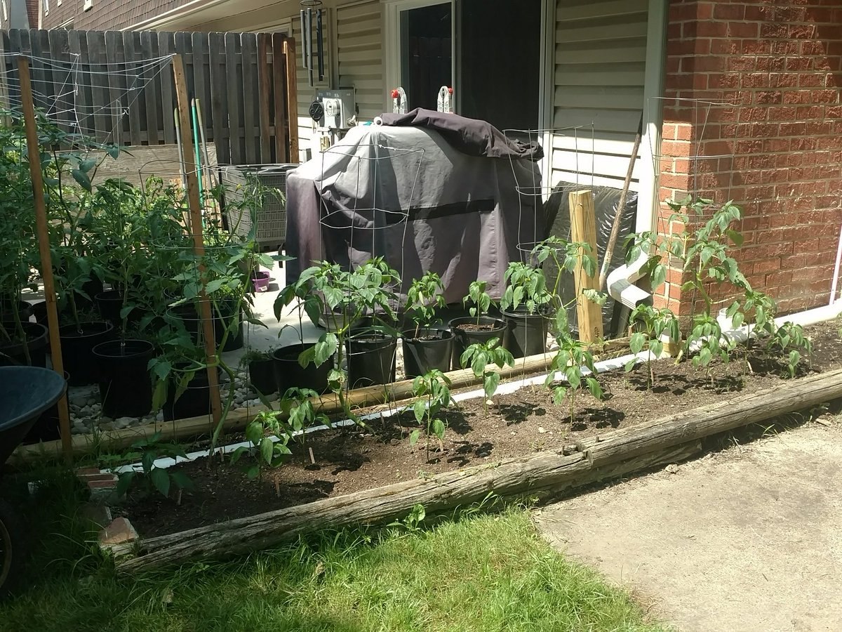 2 pic. Love my gardensHappy summer 🍆🍅🌶️🥒🏵️🌳💚🌈🐦🌞 and et8eCP38ia