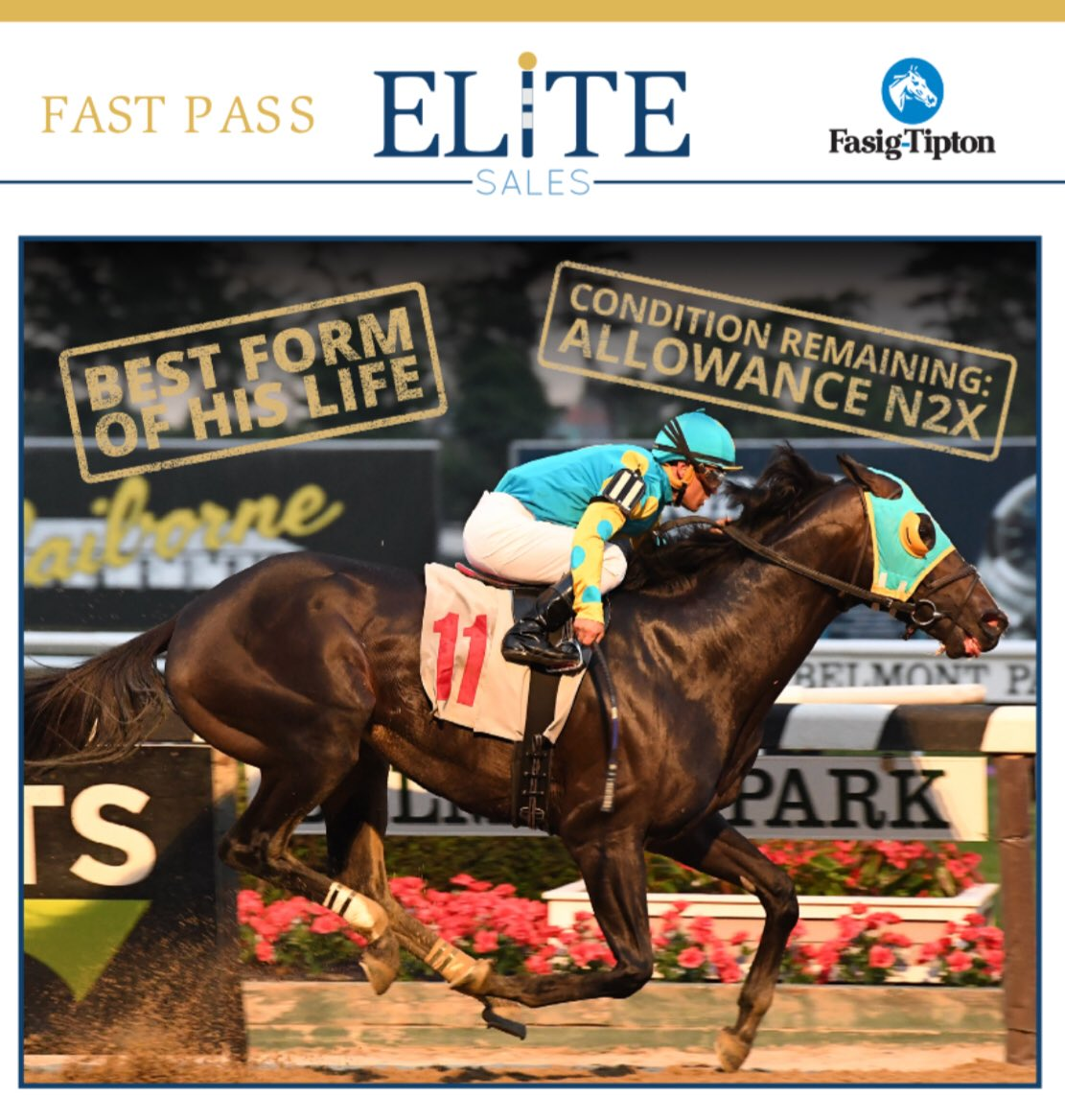 test Twitter Media - Hammerin Aamer (Hip #452) lifetime top Beyer 9️⃣6️⃣ makes him ULTRA competitive for MD Million Classic @LaurelPark  in October ($150k). 2017 winner won w/ 90 Beyer.  Competes and wins in NY hasn't been out of 💰in last 12 starts running 1's & 2's on Thoro-Graph's https://t.co/6wuAqM5ZLk