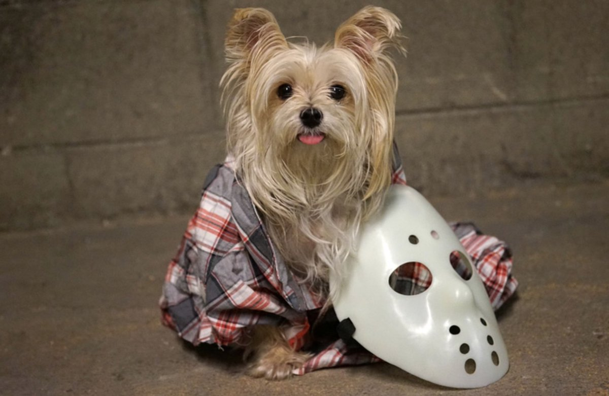 Happy Friday the 13th — especially to this dog.. https://t.co/eVW0ytRexd https://t.co/K4tkiNGGJH